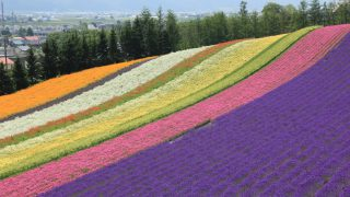 北海道2/富良野/ファーム富田の彩りの畑
