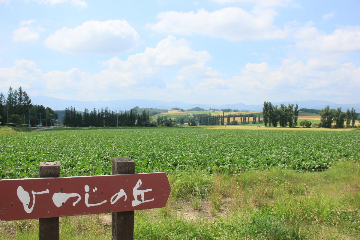 ジンギスカン ひつじの丘