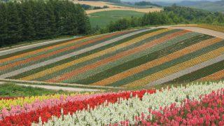 北海道7/四季彩の丘と美瑛の丘の景色