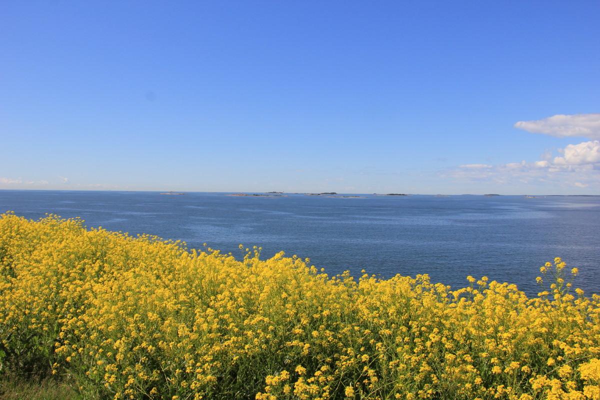 菜の花畑と海