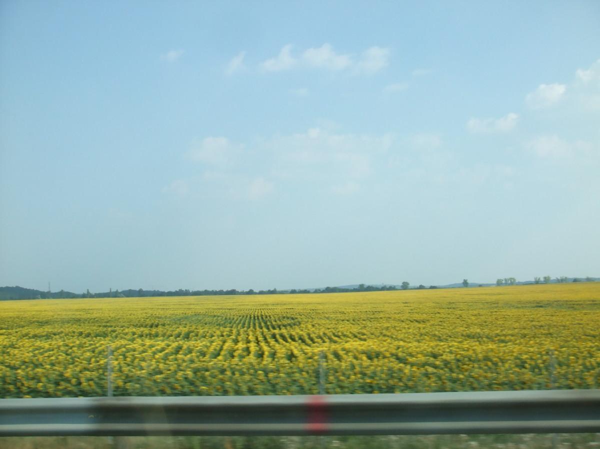 ハンガリーの高速道路からの景色
