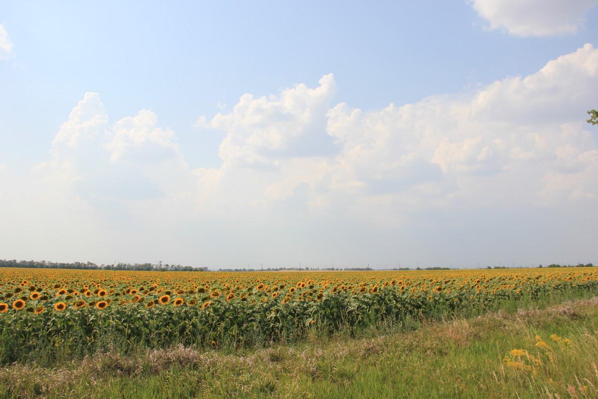 ハンガリーの平原
